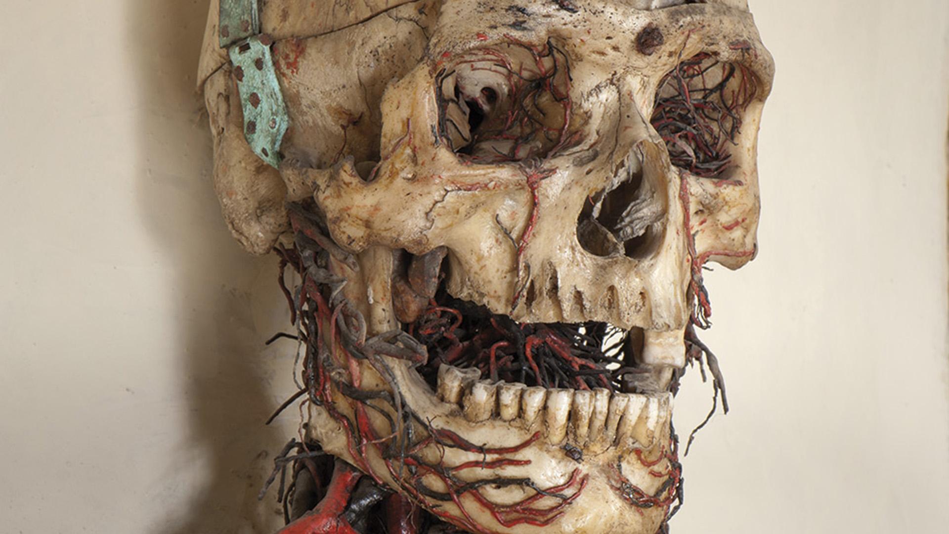Macchine Anatomiche