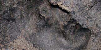 Teatro Antico di Ercolano calco della testa di una statua impressa nella lava solidificata